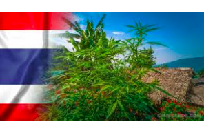 Public, private firms in Thailand can now apply to grow hemp