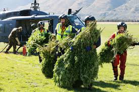 NZ Police Have Had Enough Of Wasting Money Looking For Cannabis Grows