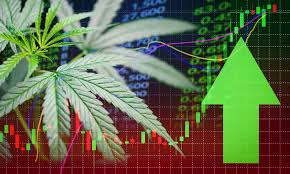 Cannabis stocks stage strong rally as prospect of Democratic Senate spurs reform hopes