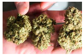 Australia: Here Come The Medical Cannabis Scams