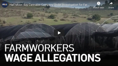 February 4 2021: Half Moon Bay Cannabis Company Under Investigation for Farmworker Wage Allegations