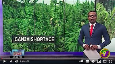 February 1 2021: Ganja Shortage in Jamaica
