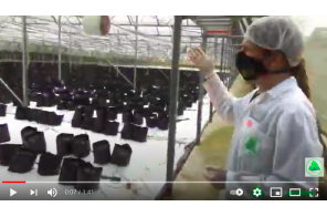February 7 2021: Time-lapse Tour Around A New Potential Cannabis Cultivation Facility in KZN, South Africa. Triple A.