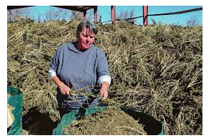 New Mexico Hemp Rules Amended