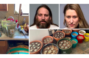 Arizona:  Camp Verde couple arrested for allegedly running a large-scale psychedelic drug business out of their home.