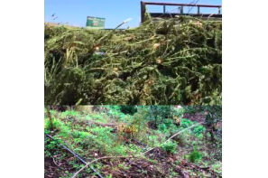 California: Marijuana Eradication Team Cleans Up Environmental Damage at Illegal Grow Sites