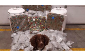 Robbie The Springer Spaniel Busts Weed Coming Into Ireland From The Netherlands