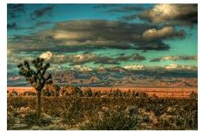 Over 54K Illegal Cannabis Plants Seized In High Desert Region Since Jan 1 2021