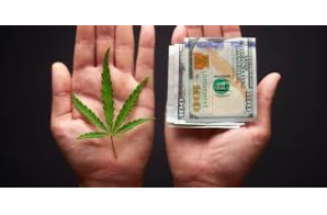 Cannabis Sold Under License Costs Nearly Twice as Much as Product From Illegal Sources