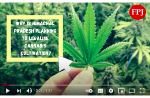 India – 9 March 2021: Why is Himachal Pradesh planning to legalise cannabis cultivation?