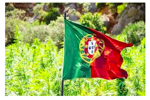 The Portugal News Op-Ed:  It's time Portugal: Legalise it