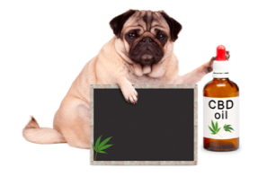 Factors to Look for when Buying CBD Oil for Dogs