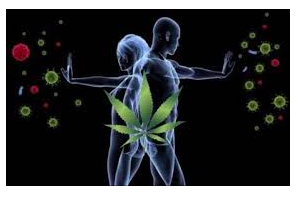CBD: The Immune System's Friend