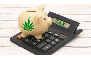 Article: Cannabis Accounting Highs and Lows