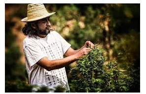 "Moroccan Cannabis Farmers Say Medical Cannabis Bill ""dreamed up in air conditioned rooms without consulting farmers"""