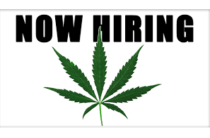 Donnell Alexander Special Report: The US Cannabis Jobs Market .. Is It Just Documentation Rather Than Growth?