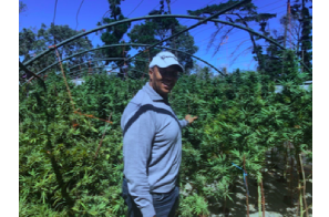 Black Farmers Association Of South Africa Looking For Inward Investment For Education, Grow & Production Of Regulated Cannabis In South Africa