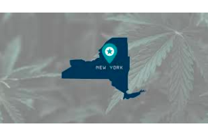 All The Latest Updates On New York Legislation