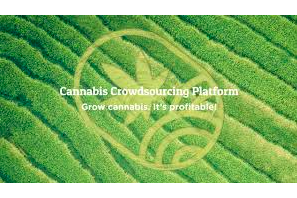"""""""Crowdgrowing""""… Pyramid Scheme Or Co-Op – You Decide"""