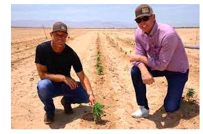 SoCal Hemp Renews Partnership with Victor Valley College to Support Hemp Research at Cadiz Ranch