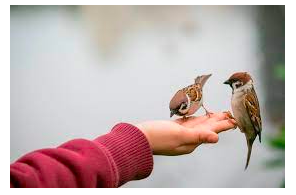 Australia- Important Update From Murdoch Press : Yepoon (Qld) … COURT: Man fed cannabis seeds to bird…