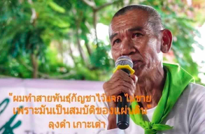 Article: Thailand's 'father' of cannabis wants small-time growers to be part of medical marijuana industry