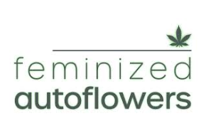 Perks of using feminized autoflower seeds for your cannabis venture