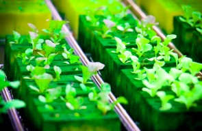 Hydroponics: What It Is And How To Start