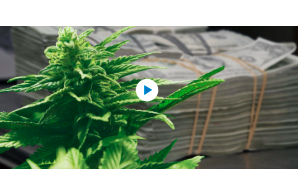 WSJ Video May 12 2021: Cannabis Industry Faces Obstacles to Banking, but That May Be Changing