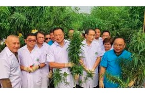 Article: Can medical cannabis in Thailand balance profits and patients?
