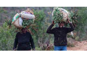 Foreign Policy Article: Africa Needs Cannabis to Spark Economic Growth
