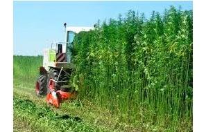 9% of all hemp acreage in Missouri failed testing in 2020