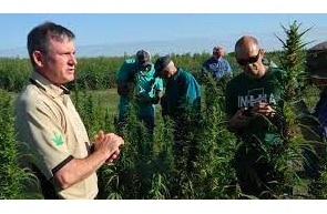 20% of Indiana's hemp crop was destroyed last year because it had too much THC