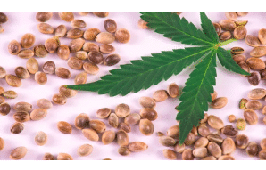 Cannabis Seeds and Banking: How Does It Work?