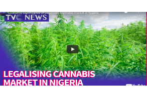 Article: Cannabis Legalization in Nigeria; Storm in a Teacup?