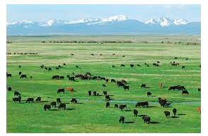 Montana law allows hemp for commercial animal feed