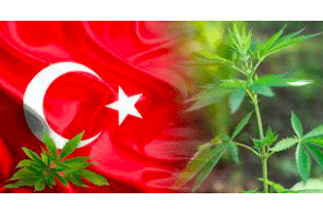 Is Industrial Hemp Production Coming Back To Turkey?