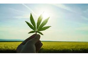 Marijuana: Prevalence, Facts, and Medical Usage