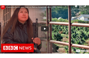 June 2 : Cannabis boom and bust on Native American land – BBC News