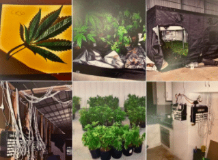 """South Australia court sentences 4 men for combined 30 years for their part in $10 million cannabis operation – all were just """"employed"""" growers"""