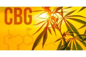 CBG: The Crucial Molecule in Cannabis