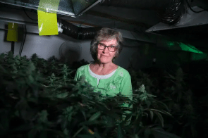 Michigan: 79 Year Old Ypsilanti registered caregiver, could face jail for defying local cannabis rules