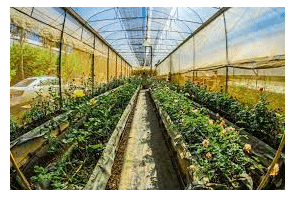 Spanish Mañana  Bureaucracy  & Hesitancy Puts Cannabis Grow Project On Hold