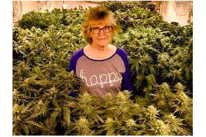 Pushing It A Bit !  79-year-old woman argues 55 marijuana plants are for personal use