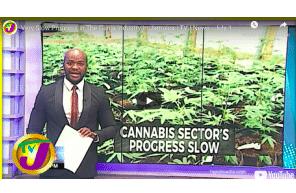 Very Slow Progress in The Ganja Industry in Jamaica   TVJ News - July 12 2021