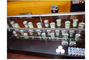 MJ Biz Article: Why 3 illicit marijuana operators decline to go legal in California