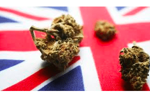 """Article: Politics UK – How the UK can become a legal-cannabinoid """"powerhouse"""""""