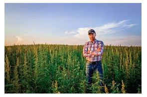 Montana hemp growers awarded $65 million for 'deceptive' deal