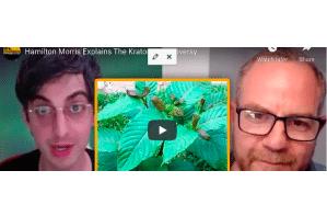 July 25 2021: Hamilton Morris Explains The Kratom Controversy