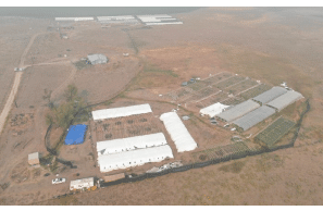 Oregon: Law Enforcement Raids 2 Large Hemp Grows Near Beatty - 22k Plants Destroyed